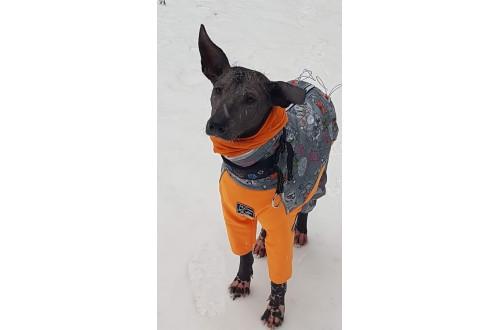 Одежда для собак из Софтшелла